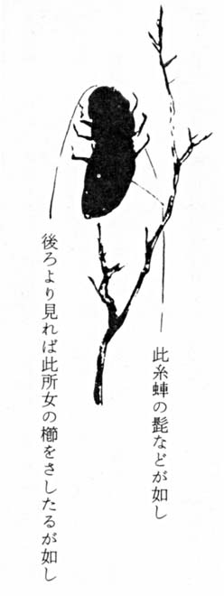 Okikumushi2