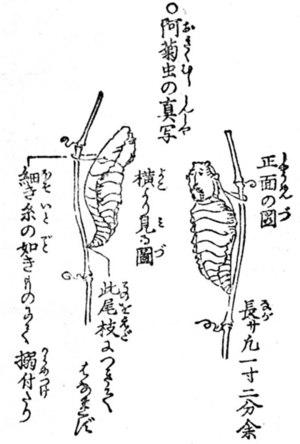 木村蒹葭堂の画像 p1_11