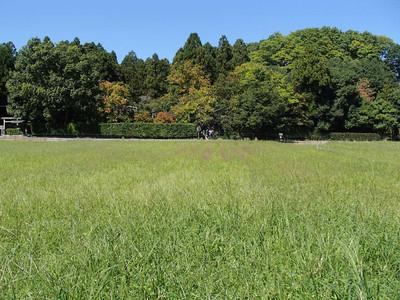 10_arashiyama